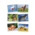 Kép 2/2 - Fényképkártyák: Állatok 54 db képpel